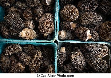 Organic Morel Mushrooms - Closeup pile of gourmet morel ...
