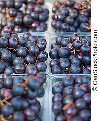 Grapes - Organic Muscadine Grapes (Vitis rotundifolia) for ...