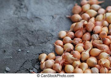 organic onions for planting - organic onions for Plantinga...