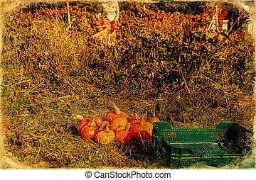 Organic permaculture garden. Harvest Hokaido, old photo ...