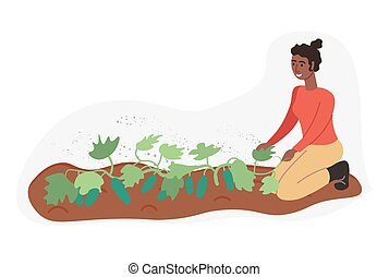 Organic production. Woman growing cucumbers isolated on ...