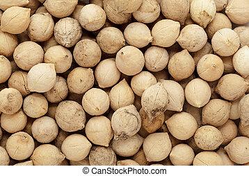 Organic Putrajeevak seeds.