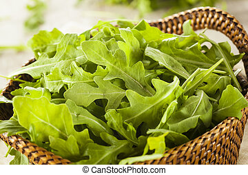 Organic Raw Green Arugula in a Basket