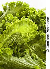 Organic Raw Mustard Greens