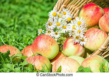 red apples in a garden on a green grass
