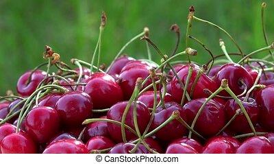 Organic ripe red cherry berries. Rotating turntable