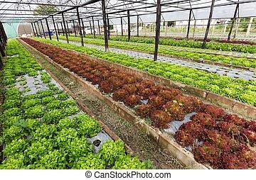 Organic salad field