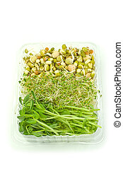 Organic sprouts
