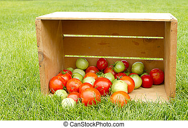Organic tomatoes in a crate