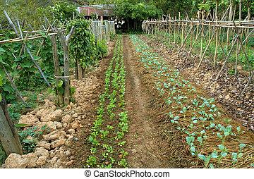 organic vegetable garden in chiang rai, north thailand