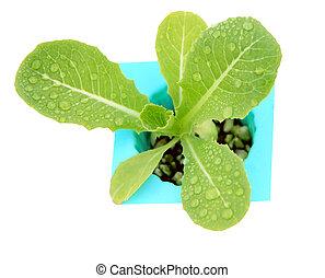 organic vegetable Stock Photo: fresh hydroponics vegetable...