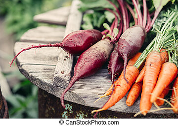 Freshly Picked Beetroot and Carrots. - Organic vegetables. ...
