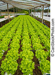Organic vegetables are grown in the mountains.