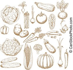 Organically healthy vegetables retro sketches - Organically...