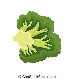 organico, illustration., cibo, cut., vettore, concept., broccolo