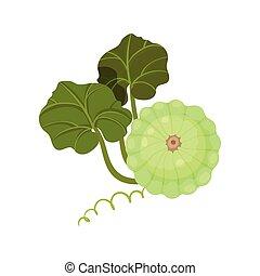 organico, illustration., concept., cibo., patisson, vettore, verde