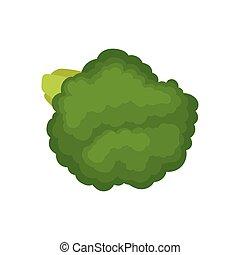 organico, illustration., concept., cibo., vettore, verde, broccolo