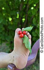 organico, maturo, dita, ciliegie, fra, piede, fresco