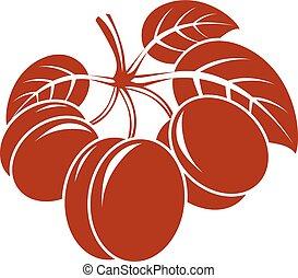 organico, maturo, illustrazione, cibo, dolce, vegetariano, albicocche, isolato, semplice, vettore, white., arancia, fruits., intero, foglie