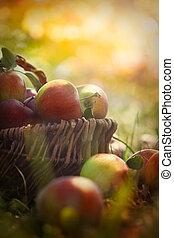 organico, mele, in, estate, erba