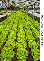 organiczny, warzywa