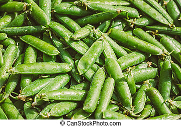 organiczny, zielone tło, świeża roślina, fasola