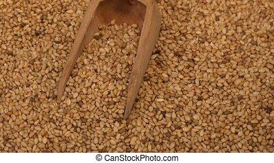 organique, cru, graines, naturel, grain, nourriture, sec, sésame