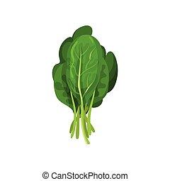 organisch, boerenkool, slaatje, gezonde , vegetarian voedsel, illustratie, bladeren, vector, achtergrond, fris, witte