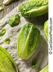 organisch, gezonde , groene, romaine lettuce