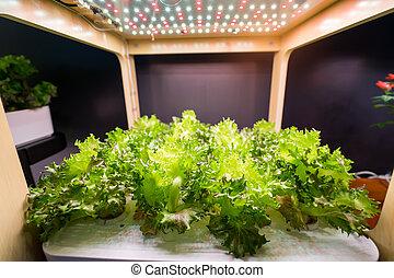 organisch, hydroponic, boerderij, landbouw, binnen, groente, technologie, groeien