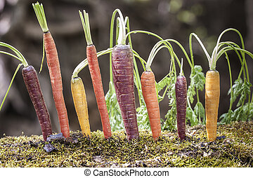 organisch, regenboog, wortels