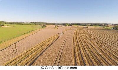 organische, grainfield, erntearbeiter, Bauernhof, aus,...