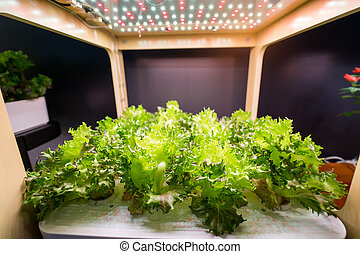 organische , hydroponic, gemüse, wachsen, innen, bauernhof, landwirtschaft, technologie