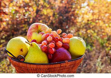 organisk, frukt, in, korg, in, sommar, grass., frisk, druvor, päron, och, äpplen, in, natur