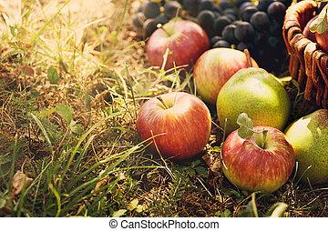 organisk, frukt, in, sommar, gräs