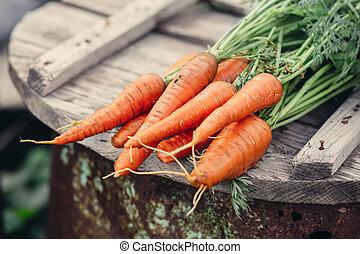organisk, moroten, lantgård, mat