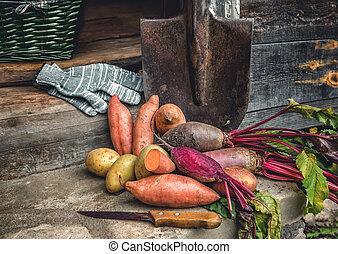 organisk, rotfrukter, och, a, enkel, sötpotatis, lögnaktig, på, den, spade, och, rå, tyg, tjänat, den, village., höst, harvest., avskrift, den, place.