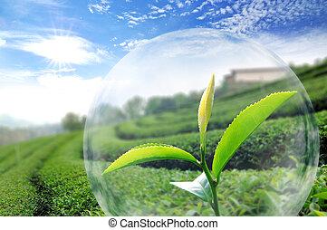organisk, te löv, grön