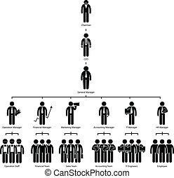 organización, gráfico, árbol, compañía