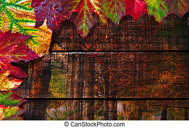 organizado, coloridos, madeira, folhas, outono, molhados, antigas, tabela