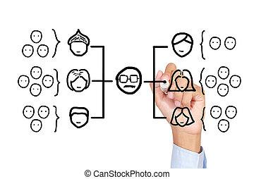 Organization chart - Drawing teamwork chart on white board