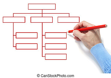 Organization chart - The hand draws an diagram on a white...