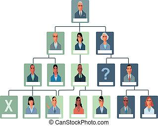 organizzazione, grafico, struttura
