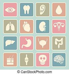 organs, mänsklig, ikon