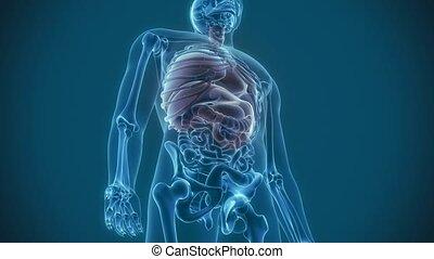 organs pain