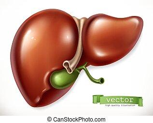 organs., vektor, medicin, liver., 3, inre, ikon