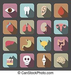 organy, ludzki, ikona