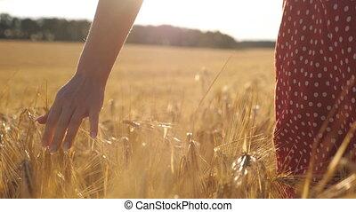 orge, arrière-plan., arrière, croissant, vue, jeune, champ, mouvement, marche, lumière soleil, céder, femme femelle, toucher, lent, en mouvement, oreilles, par, pré, doré, blé, crop., mûre