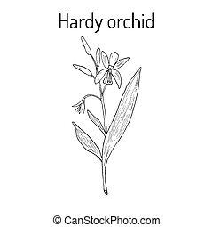 orhidea, bátor, berendezés, gyógyító