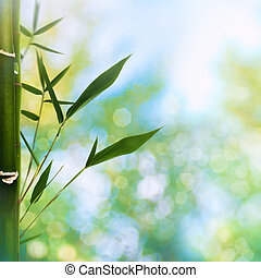 Oriental abstract backgrounds with bamboo grass and beauty summer bokeh